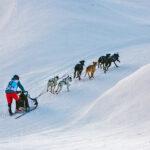 Schlittenhunderennen Kandersteg